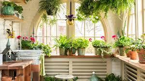 indoors garden garden indoors growing an indoor rose bush indoors garden party
