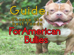 choosing the right foods for american bully dogs guide