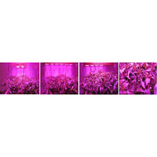 apollo power and light 1 000w apollo led grow light indoor plant light with high power