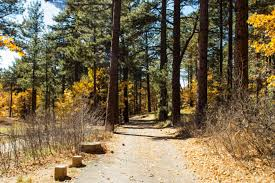 California Forest images 4 stunning national forests in southern california jpg