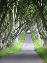 cool trees ireland day 11 u2013 dark hedges u2013 some really cool trees trailsandtrips