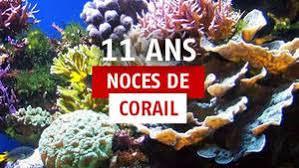 11 ans de mariage 11 ans de mariage idées cadeaux pour fêter les noces de corail