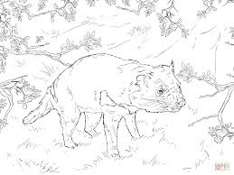 tasmanian devil coloring page free printable coloring pages