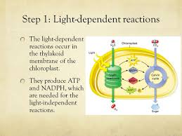 Where Do The Light Independent Reactions Occur What Is Photosynthesis Ppt Video Online Download