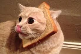 Cat Breading Meme - new internet meme breading cats the trupanion blog