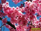 10อันดับดอกไม้ที่สวยที่สุดในโลก | evefour