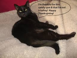 thanksgiving peas love joy and peas happy thanksgiving from me u0026 my cat