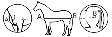 How To Measure For A Rug How To Measure A Horse For A Rug Rugs Ideas