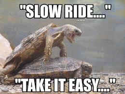 Take It Easy Meme - slow ride take it easy turtle humor laughter is the best