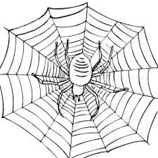 symmetry coloring pages tarantula spider symmetry coloring page tarantula spider symmetry