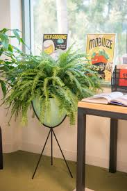 Office Desk Plant by Plant Paradise An Office Oasis Hayneedle Blog