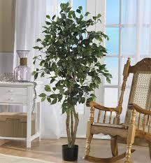 best indoor house plants trees enliven your indoors homedecor