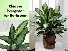 Best Plants For Bathrooms 13 Best Plants For Every Room In Your Home Bahay Ofw