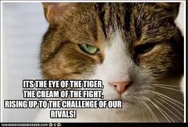 Eye Of The Tiger Meme - its the eye of the tiger the cream of the fight rising up to the
