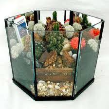 plants dish gardens terrariums kremp com