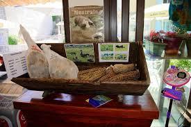 chambre d hote aullene le cochons dans tous ses états photo de chambres d hôtes san