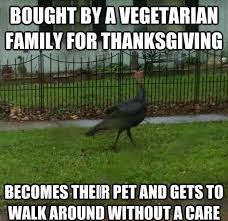 Funny Thanksgiving Meme - 16 funny thanksgiving memes funny pictures pinterest funny