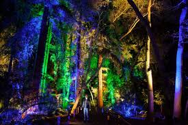 Life University Lights Enchanted Forest Of Light Descanso Gardens Guild