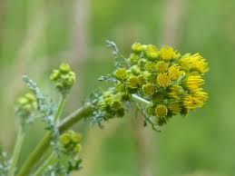 Free Images Nature Blossom Meadow Green Herb Produce