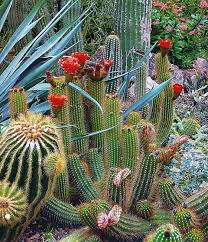 how to choose the best plants for a home garden durrett homes