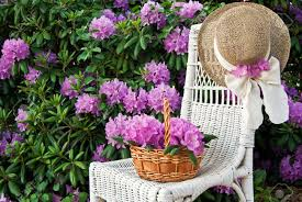 flower basket on white wicker chair with hat stock photo picture