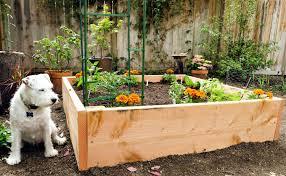 Mulching Vegetable Garden by Raised Bed Vegetable Garden Mulch The Garden Inspirations