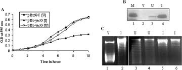 yacg from escherichia coli is a specific endogenous inhibitor of
