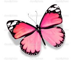 pink butterfly isolated on white background u2014 stock photo