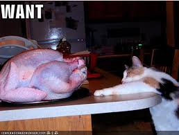 25 cats celebrating thanksgiving picture gallery cattime