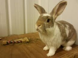thinking of getting a bunny valley vets ltd