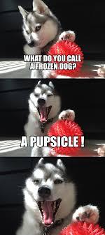 Pun Meme - alaskan klee kai miniature husky bad pun meme imgur