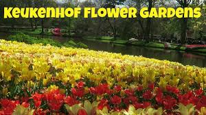 tulips holland keukenhof flower gardens netherlands youtube