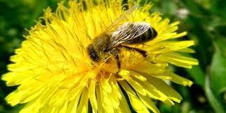 world bee day to be e or not to be e the case for