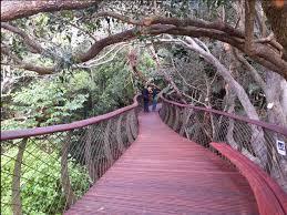 Kirstenbosch Botanical Gardens Kirstenbosch National Botanical Gardens Cape Town Western Cape