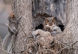 brave squirrel is living in the same tree as an owl family