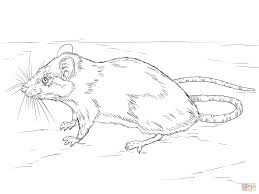 black rat coloring page free printable coloring pages