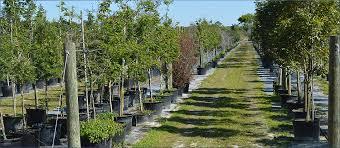 Trellis System Tree Trellis System Parrish Inc