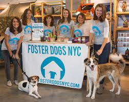 mission statement foster dogs