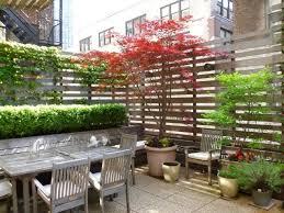 kletterpflanzen fã r balkon 50 best terrasse sichtschutz images on pergolas