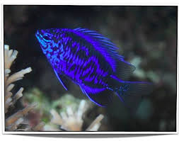best 25 freshwater fish for sale ideas on plecostomus
