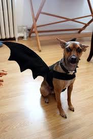 Bat Halloween Costume Kids 10 Bat Costume Ideas Kids Bat Costume