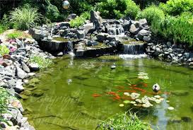 backyard koi pond design and ideas of house