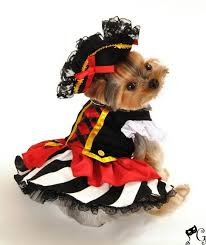Girls Halloween Pirate Costume 88 Pet Costumes Images Animals Puppies
