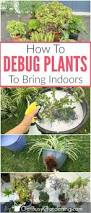 295 best plant propagation images on pinterest gardening tips