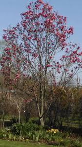 trees at marysplantfarm