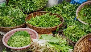 Sweet Flag Herb Natural Herbs That Optimize Brain Health Rar Nootropics Blog