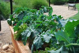 vegetable garden planting planting a vegetable garden garden spacing