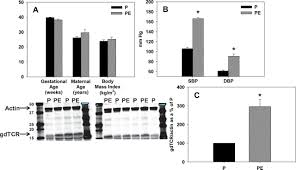 depletion of mhc class ii invariant chain peptide or γ u2013δ t cells