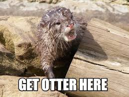 Animal Pun Meme - get otter here lolbook