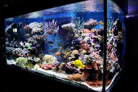 Reef Aquarium Lighting Most Beautiful Reef Tanks All Time Ratemyfishtank Com